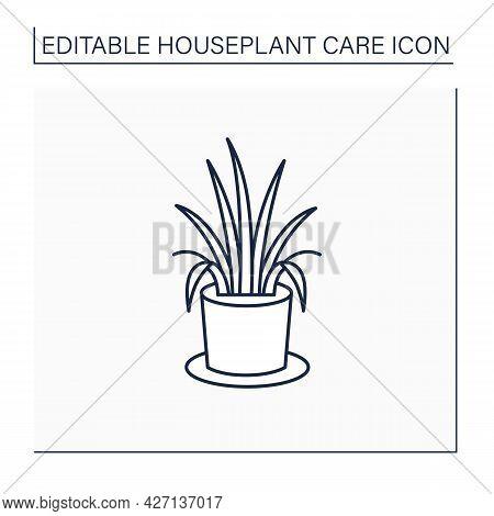 Chlorophytum Comosum Line Icon. Home Gardening. Tropical Plant Interior Decor. Beautiful Home Plant