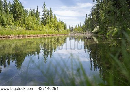 Nature Scenery With Lush Green Coniferous Forest With Calm River Reflecting Its Surroundings, Shot I