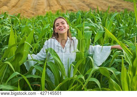 Young Happy Girl Showing Harvested Corn In The Field. American Woman In A White Dress Harvests Corn.