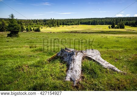 Summer Pasture With Old Stump And Flock Of Sheep Among Spruce Forests Under Blue Sky - Czech Republi