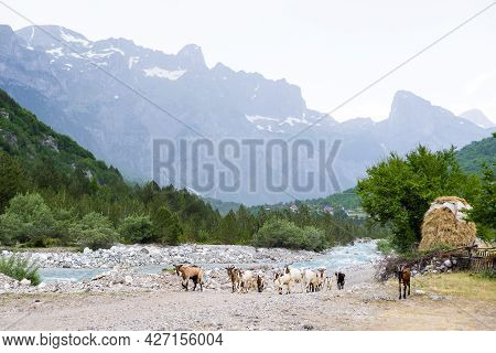 Natural Summer Landscape With Grazing Goats. Mountain Valley During Cloudy Summer Middle Day