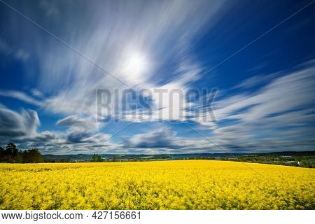 Long exposure panorama of agricultural rapeseed field with blurry clouds. Canola is an oil crop for fuel production.