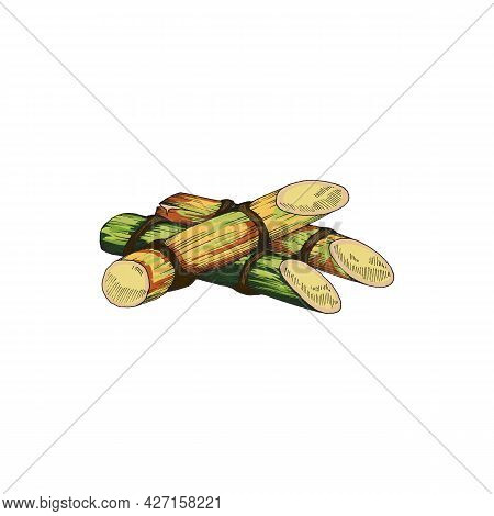 Vector Illustration Of Sugar Cane Stalks Hand Drawn And Isolated On White Background. Sketch Plants