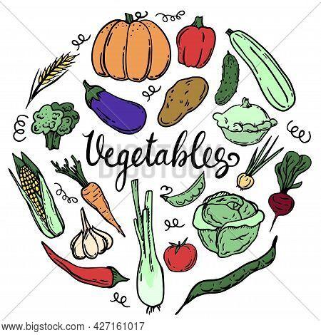 Vector Set Of Vegetables. Doodle Hand Drawing. Autumn. Eggplant, Pattison. Onion, Garlic, Tomato, Pe