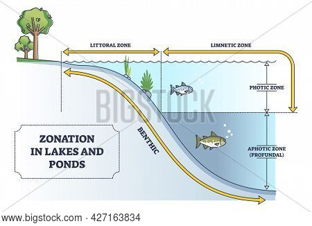 Zonation In Lakes And Ponds As Educational Freshwater Levels Outline Diagram. Educational Labeled Sc