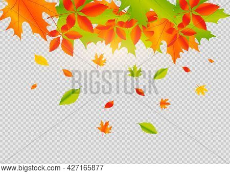 Autumn Falling Leaves Isolated On White Background.