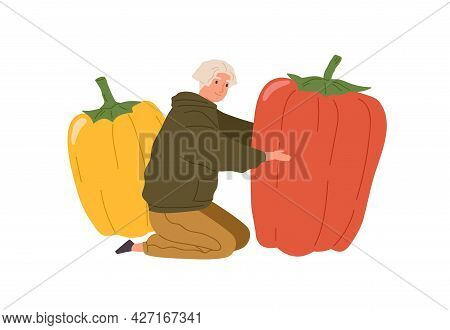 Happy Tiny Person Holding Huge Sweet Bell Pepper. Vegetarian Man With Big Fresh Vegetables. Farmer W
