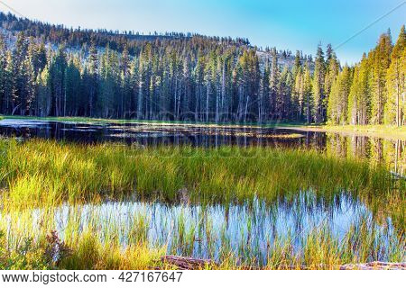 Sunrise. Majestic coniferous forest are reflected in the smooth water. Quiet round grassy lake in a coniferous forest. The Tioga Road and Pass in Yosemite Park. USA
