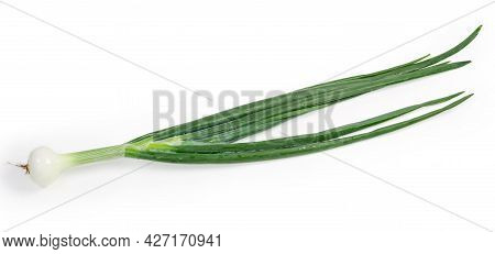 Single Washed And Peeled Stalk Of Green Onion With Small Young Bulb On A White Background