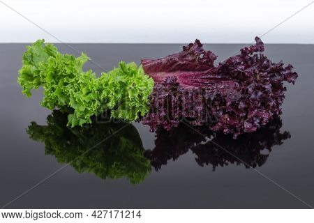 Lettuce Leaves Two Varieties - Red Lollo Rosso And Pale Green Lollo Bionda On Dark Reflective Surfac