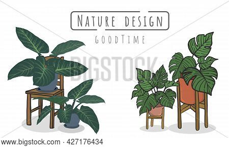Potted Plants Set, Indoor And Outdoor Landscape Garden Potted Plants Isolated On White, Vector Set G