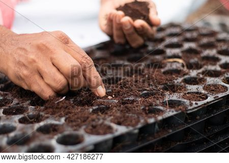 Close Up Of Farmer Hands Adding Fertilisers And Seeding To Germination Tray At Greenhouse Or Polyhou