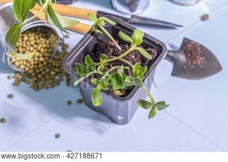 Spring Planting And Gardening Concept. Tools, Flowerpots, Buckets, Decor