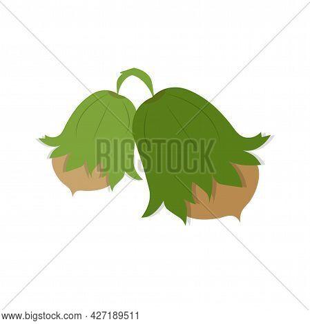 Hazelnut Icon Art Design Element Food Plant Stock Vector Illustration For Web, For Print