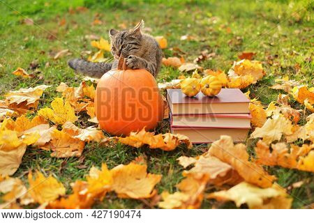 Autumn Books, Pumpkin And Cat.halloween Books. Autumn Reading.funny Tabby Kitten With Books And Pump