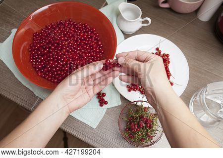 The Girl Sorts And Sorts Red Currants In The Kitchen
