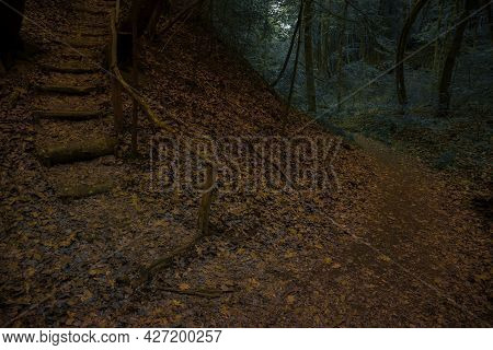 Mystery Moody Forest Landscape In Autumn October Season With Stairway Path And Dark Trees Background