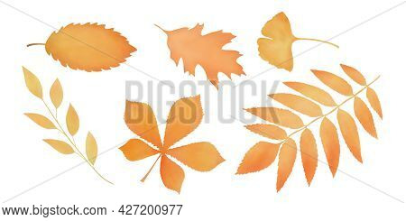 Set Of Withering Autumn Leaves. Watercolor Aquarelle Technique. White Background. Isolated Leaves. H