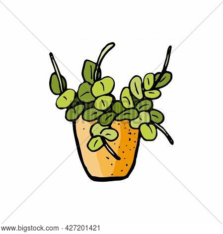 Doodle Style Home Plant. Ornamental Houseplant In A Pot. Drawn By Hand. Clip Art. Flowerpot Icon. Ve