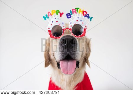 A Cute Dog Is Sitting At His Birthday Party Wearing Glasses And Clothes On A White Background. A Hol