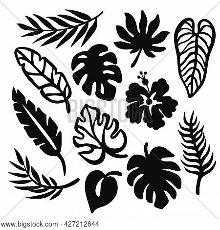 Tropic Leaves Monochrome Collection Leaves Of Exotic Plants Carved Openwork Contours For Print And P