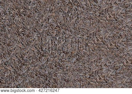 Background From Dry Cumin Seeds. Close-up. Seasoning.