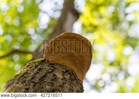 Mushroom, Woody, On A Tree, One, Brown, Bottom-up, Color, Strong Background Blur