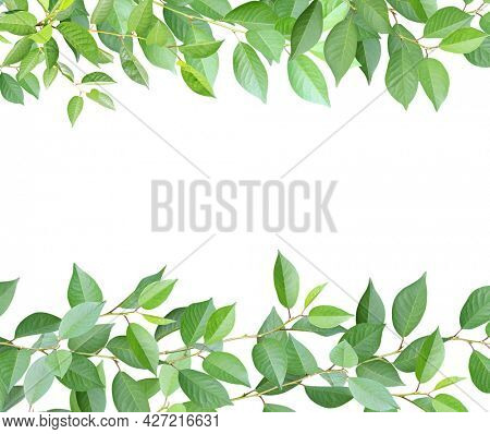 Decorative frame with branches and green leaves. Cherry twigs border. Isolated on white background