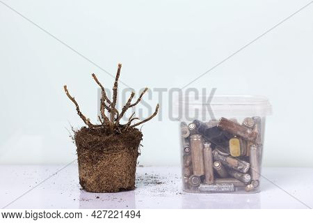 A Dead Plant With An Earthen Clod. Nearby Is A Container With Corroded Waste Batteries. Waste Recycl
