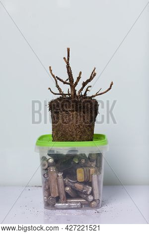 A Dead Plant With An Earthen Clod. Stands On A Container With Corroded Waste Batteries. Waste Recycl