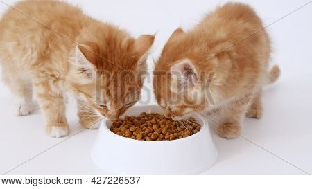 Two Ginger Kittens Eating Fresh Dry Cat Food For Small Kittens. Red Cats Eats From A Plate Of Food.