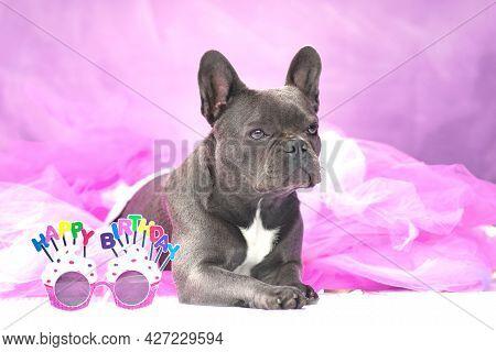 Black French Bulldog Dog Wearing Pink Tutu Skirt With Glasses Saying 'happy Birthday'