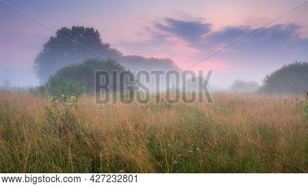 Summer Misty Landscape. Foggy Sunrise Above A Meadow. Low Red Clouds In The Sky. High Grass And Tree