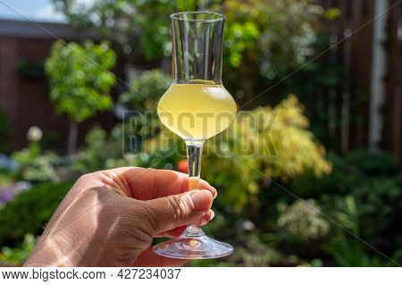 Drinking Of Cold Sweet Italian Strong Alcoholic Liquor Limoncello Made From Fresh Lemons.