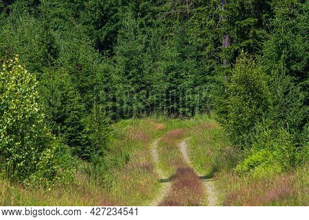 Walking Path In Forest. Green Forest Footpath.