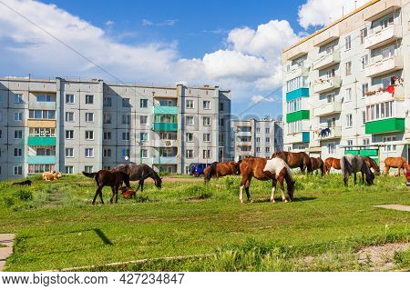 Horses And Cows Graze In A Meadow Near Panel Residential Buildings In Siberia. Russian Urban Concept