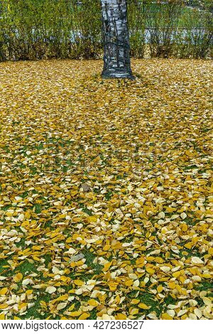 Low Level View Of Fallen Autumn Leaves Under A Tree. Vertical Shot
