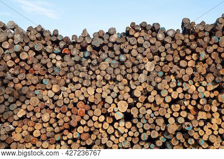 Forestry Logs Stacked Raw Wood Forest Cut Industry Background