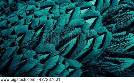 Blue Pheasant Feathers With A Visible Texture. Background