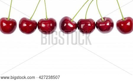Ripe Red Sweet Cherry Isolated On White Background. Macro Photo Close Up. Long Cherries Banner With