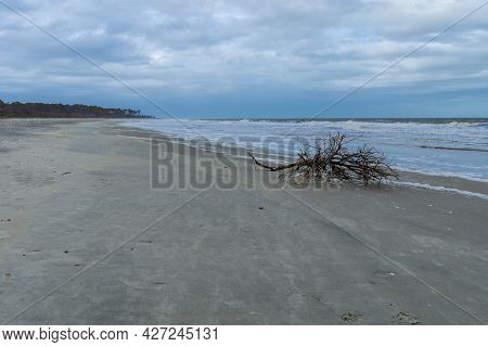 Large Tree Branch Broken By The Wind On The Coastal Shoreline, Heavy Surf And Storm Clouds, Horizont