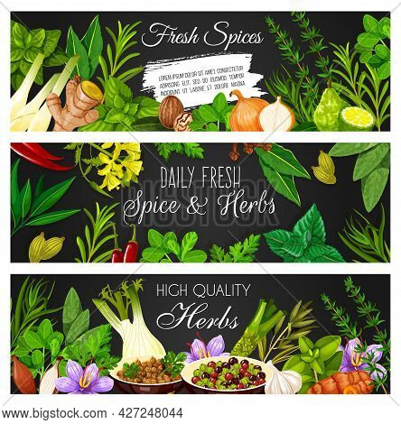 Herbs, And Seasonings Banners. Vector Oregano, Basil And Ginger, Marjoram, Onion And Tarragon, Thyme
