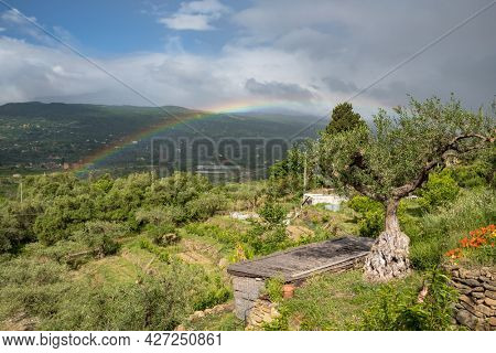 Rainbow in the sky over a vegetable garden and olive trees in Sicily, Italy. Beautiful Mediterranean landscape during rain with rainbow over old olives trees.