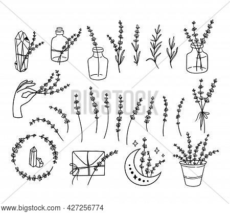 Wildflowers Lavender Black And White Clipart Bundle, Line Lavender Flower Set, Botanical Floral Isol