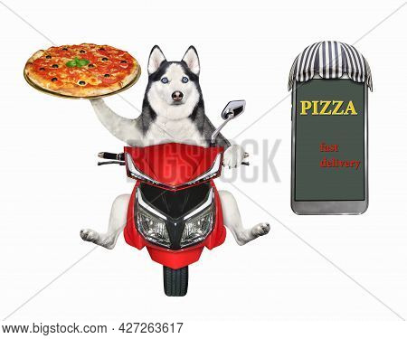 A Dog Husky Courier Delivers Pizza On A Red Moped. Fast Delivery. White Background. Isolated.