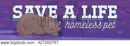 Save Life Homeless Pet Poster With Sleeping Cat Under Rain. Concept Of Rescue And Adopt Abandoned An