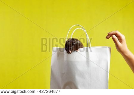 In The Photo, A Hamster On A Paper Bag Is The Concept Of Selling, Buying.
