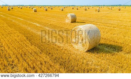 Above View Of Agricultural Field With Round Bales Of Straw, After Harvesting Cereal Prepared For Far