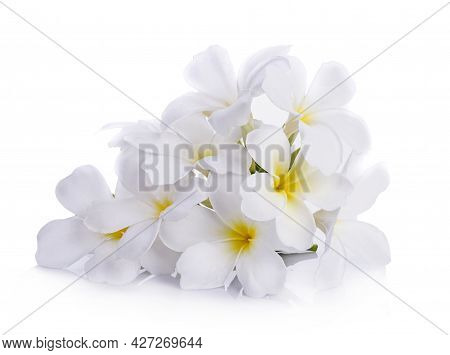 A White Prangipani Isolated On White Background