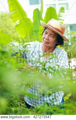 Happy Asian Elderly Woman Make A Garden And Plant Trees At Home. Social Distance Prevent Covid-19. H
